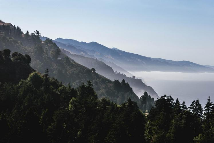 Landscape of pine trees, mountains and fog