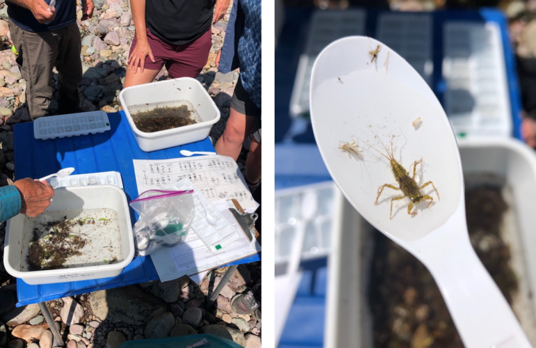 People examine bugs in containers on a table, one bug sits on a spoon
